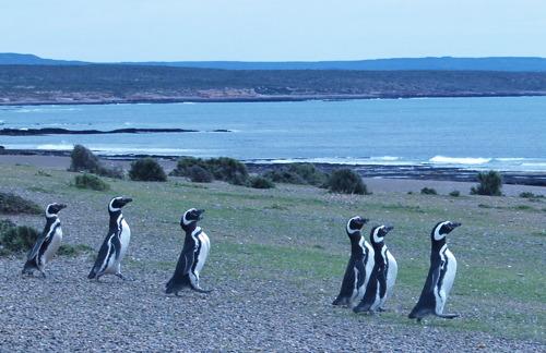 penguins_puntatombo